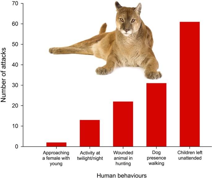 cougar i porsgrunn singeltje bergen op zoom