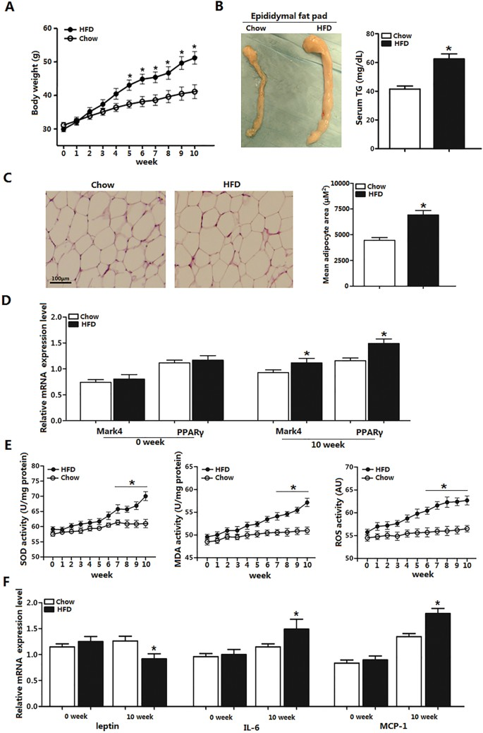 Mark4 Promotes Oxidative Stress And Inflammation Via Binding To Pparg And Activating Nf Kb Pathway In Mice Adipocytes Scientific Reports