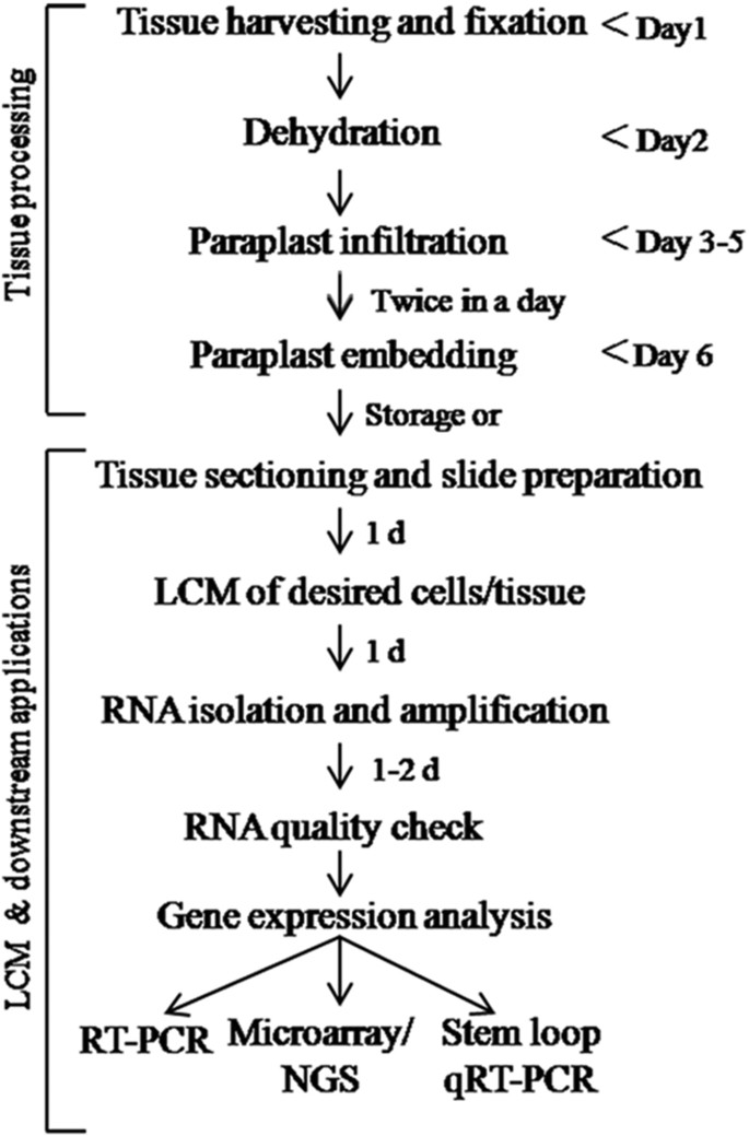 An Efficient Lcm Based Method For Tissue Specific Expression Analysis Of Genes And Mirnas Scientific Reports