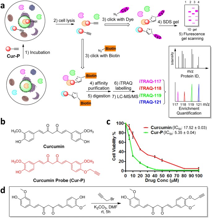 In Situ Proteomic Profiling Of Curcumin Targets In Hct116 Colon Cancer Cell Line Scientific Reports