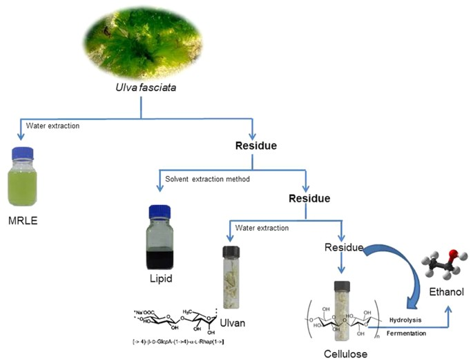 An Integrated Process For The Extraction Of Fuel And Chemicals From Marine Macroalgal Biomass Scientific Reports