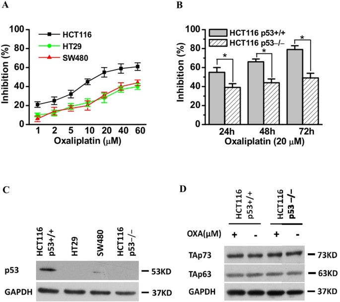 Upregulation Of Cyp2s1 By Oxaliplatin Is Associated With P53 Status In Colorectal Cancer Cell Lines Scientific Reports