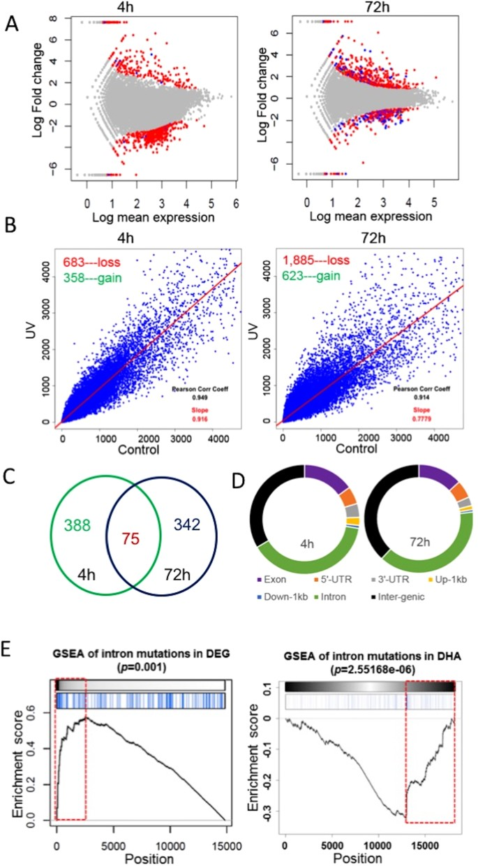 Epigenetic and genetic dissections of UV-induced global gene dysregulation  in skin cells through multi-omics analyses | Scientific Reports