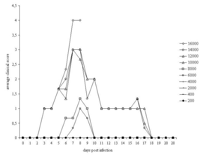 Test karcsúló posológia - Trichinella peg. Gyermekgyógyászat