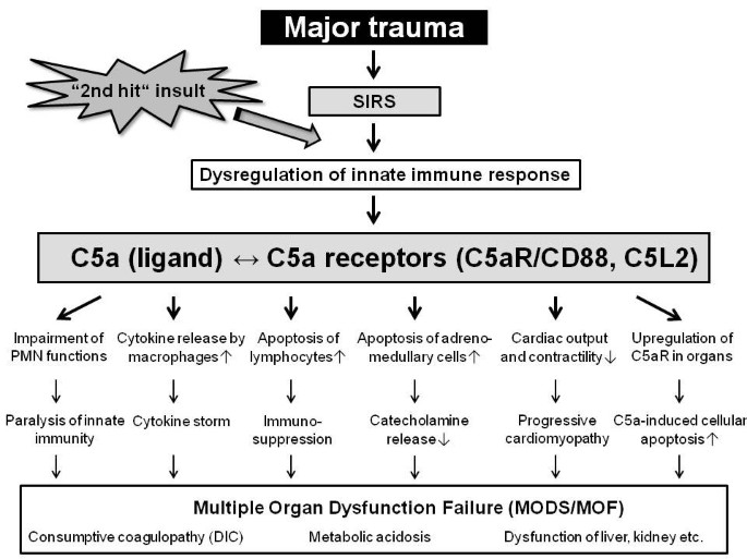 Molecular mechanisms of inflammation and tissue injury after