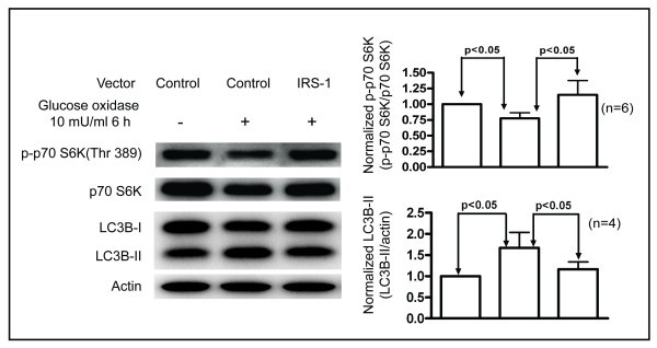 Insulin receptor substrate-1 prevents autophagy-dependent cell death