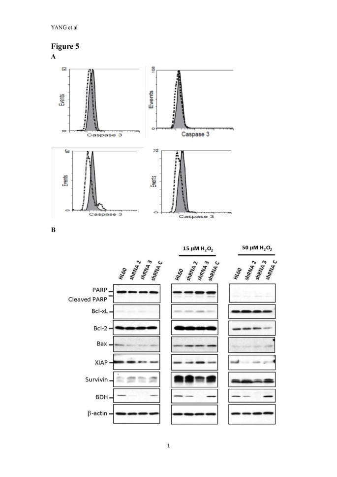 Human BDH2 , an anti-apoptosis factor, is a novel poor
