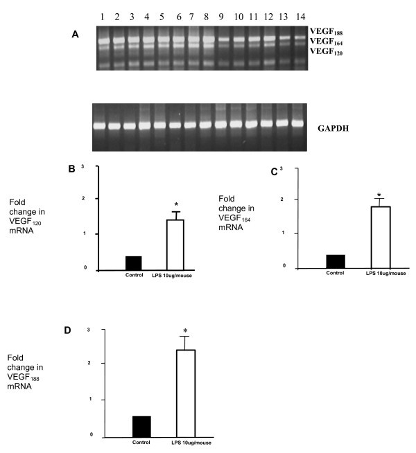 Vascular Endothelial Growth Factor (VEGF) isoform expression and