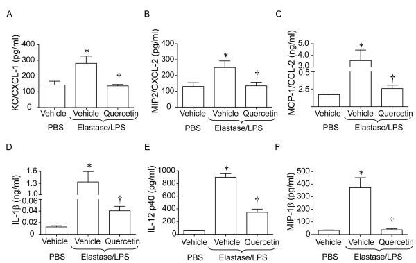 Quercetin prevents progression of disease in elastase/LPS