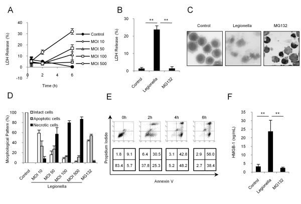 Legionella pneumophila induces cathepsin B-dependent