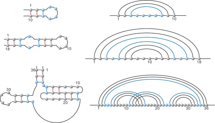 Sequence-structure relations of pseudoknot RNA | BMC