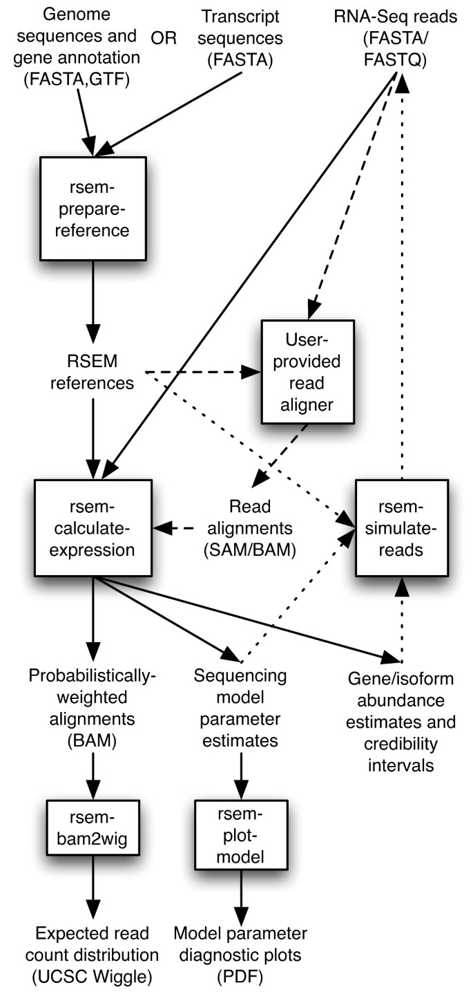 RSEM: accurate transcript quantification from RNA-Seq data with or