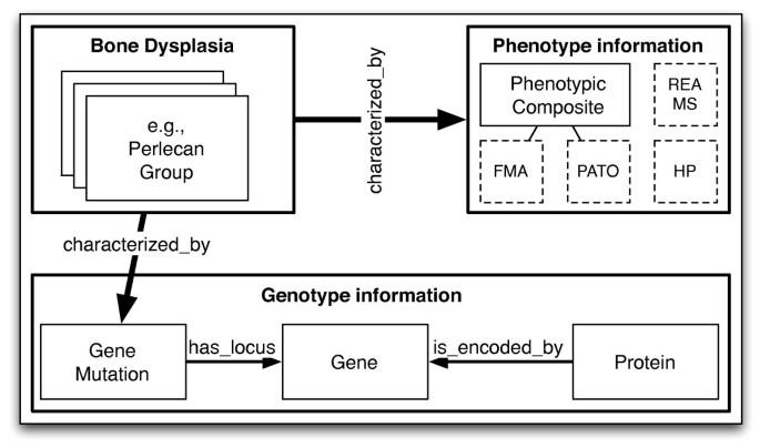 The Bone Dysplasia Ontology: integrating genotype and