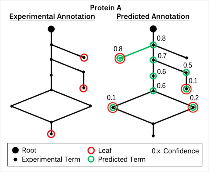 Homology Based Inference Sets The Bar High For Protein