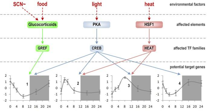 Bioinformatics analysis of transcriptional regulation of