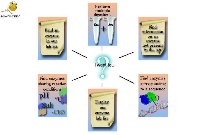 REtools: A laboratory program for restriction enzyme work