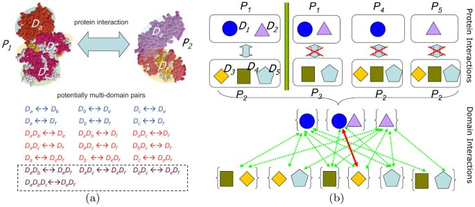 Analysis on multi-domain cooperation for predicting protein-protein