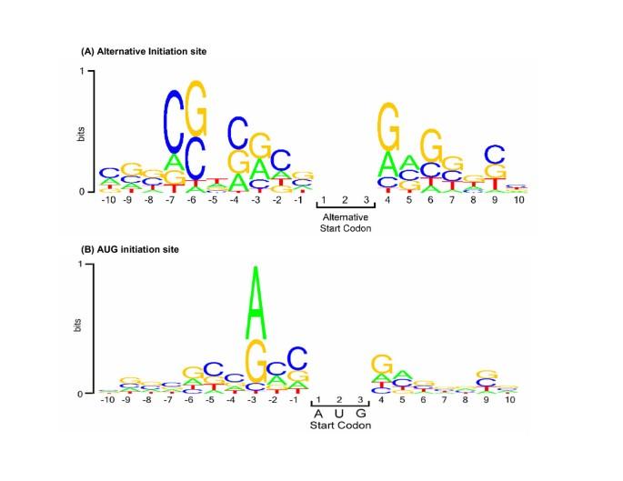 Bioinformatic analyses of mammalian 5'-UTR sequence