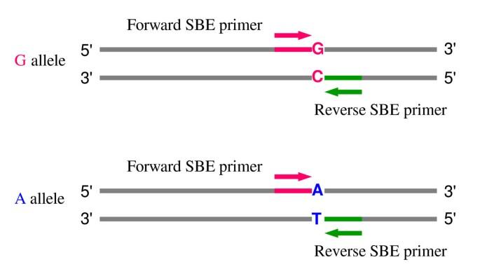 Batchprimer3 A High Throughput Web Application For Pcr And Sequencing Primer Design Springerlink