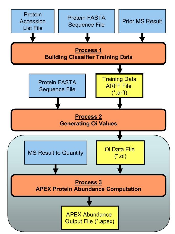 The APEX Quantitative Proteomics Tool: Generating protein