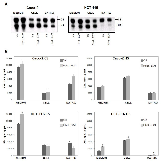 Syndecan-2 is upregulated in colorectal cancer cells through