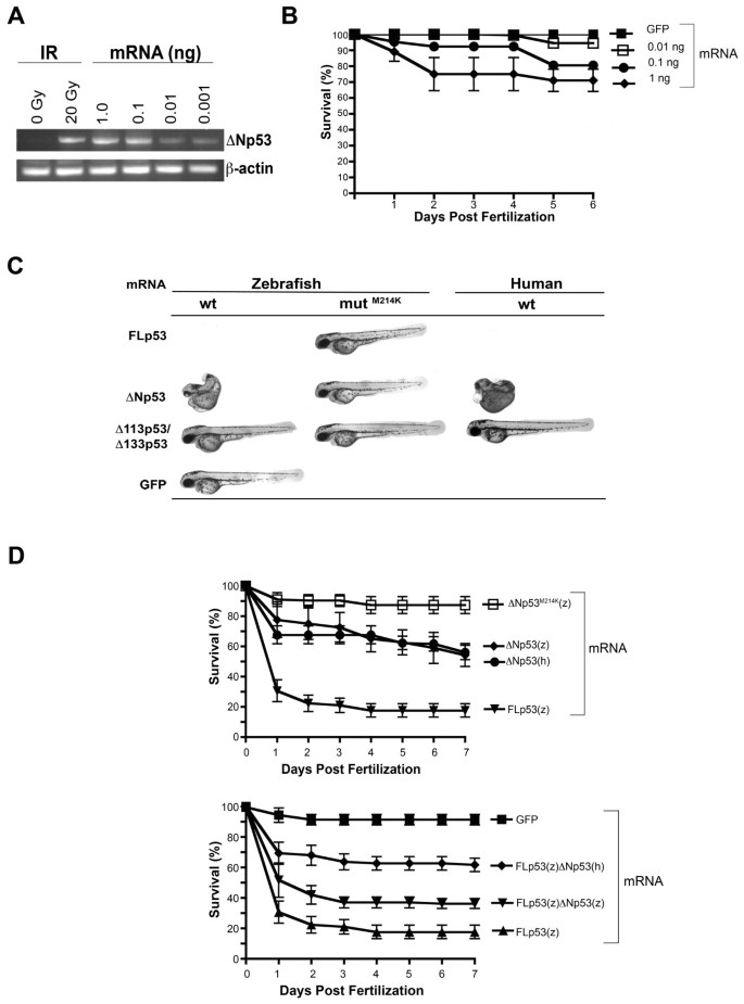 Differential regulation of p53 function by the N-terminal