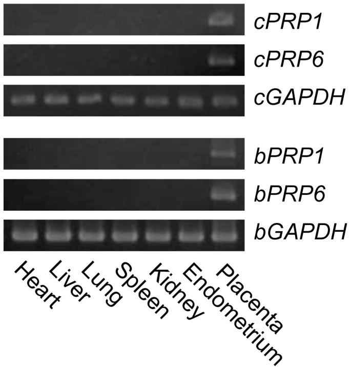 Gene expression profiles of novel caprine placental