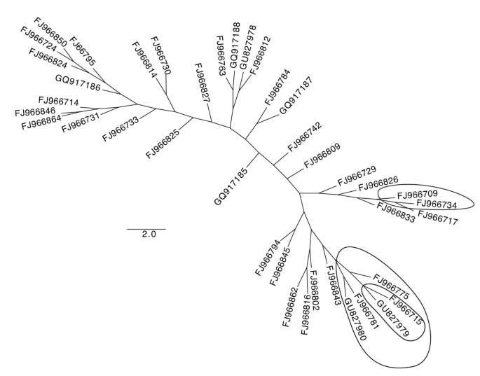 High amino acid diversity and positive selection at a putative coral