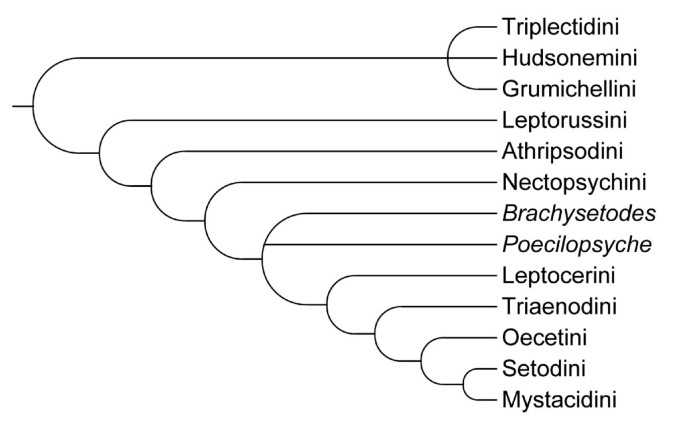 A new classification of the long-horned caddisflies (Trichoptera