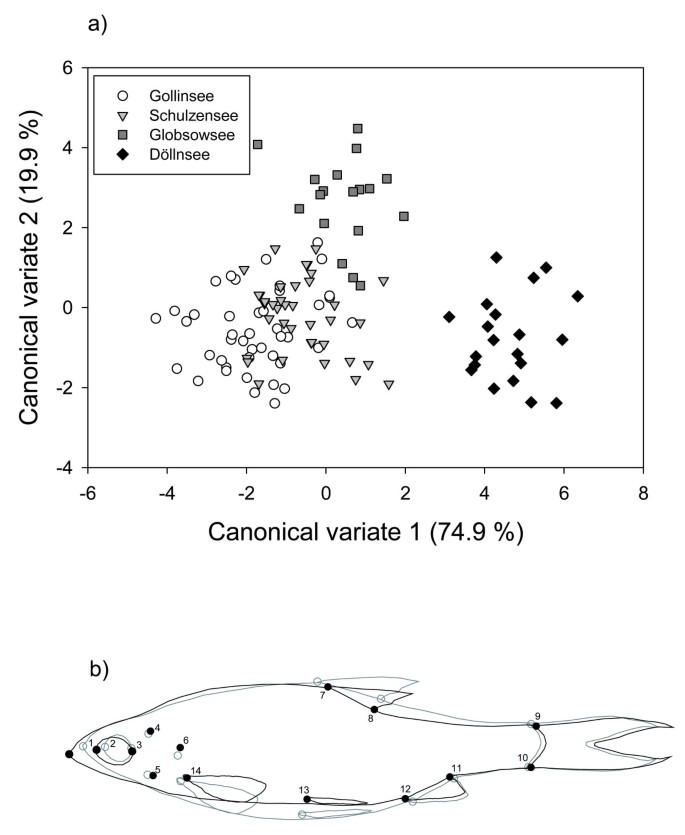 Effects of predation pressure and resource use on