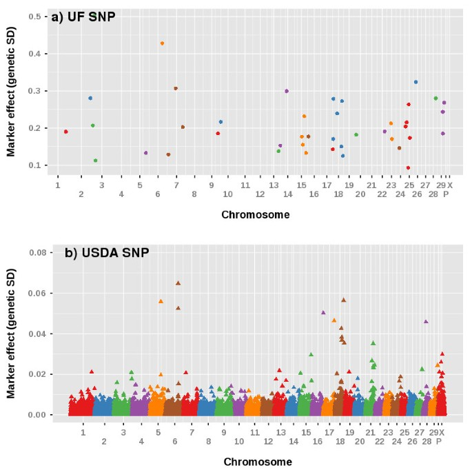 Discovery of single nucleotide polymorphisms in candidate genes