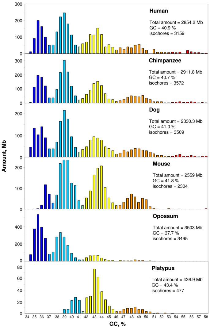The evolution of isochore patterns in vertebrate genomes