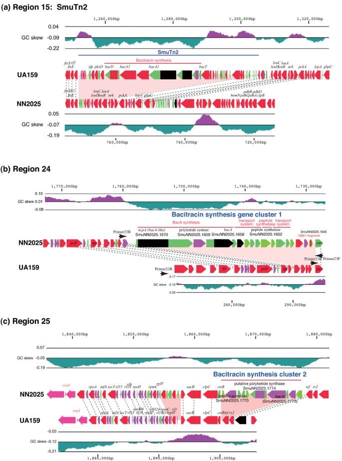 Comparative genomic analyses of Streptococcus mutans provide