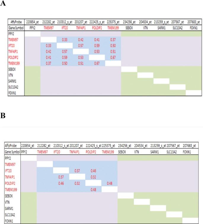 Complex sense-antisense architecture of TNFAIP1/POLDIP2 on