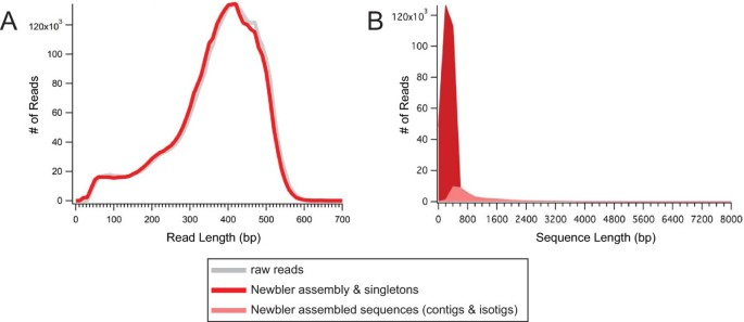 De novo assembly and characterization of a maternal and