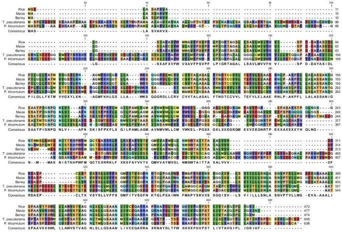 Whole transcriptome analysis of the silicon response of the
