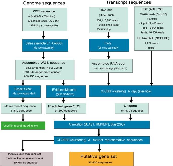 KONAGAbase: a genomic and transcriptomic database for the