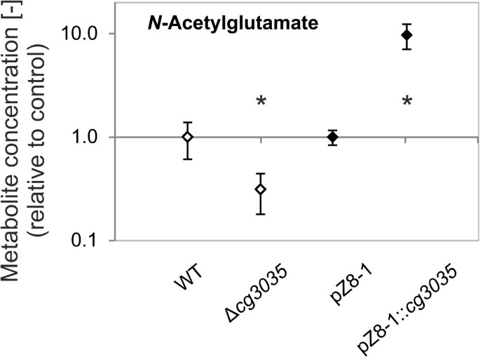 A novel type of N -acetylglutamate synthase is involved in