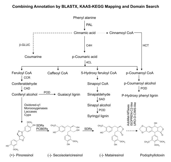 De Novo Transcriptome Analysis Using 454 Pyrosequencing Of