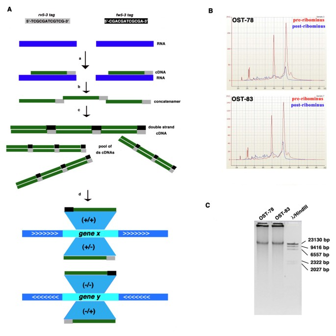 A platform independent RNA-Seq protocol for the detection of