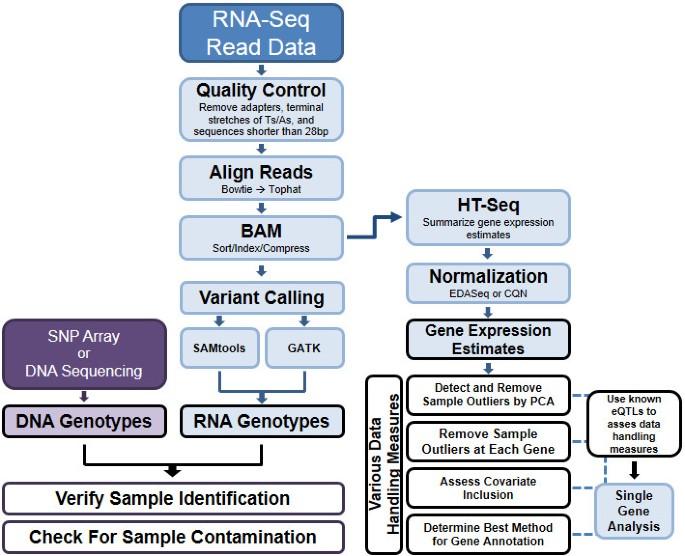 RNA-Seq optimization with eQTL gold standards | BMC Genomics | Full Text