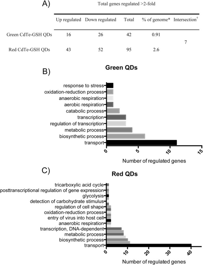 Microarray analysis of the Escherichia coli response to CdTe-GSH