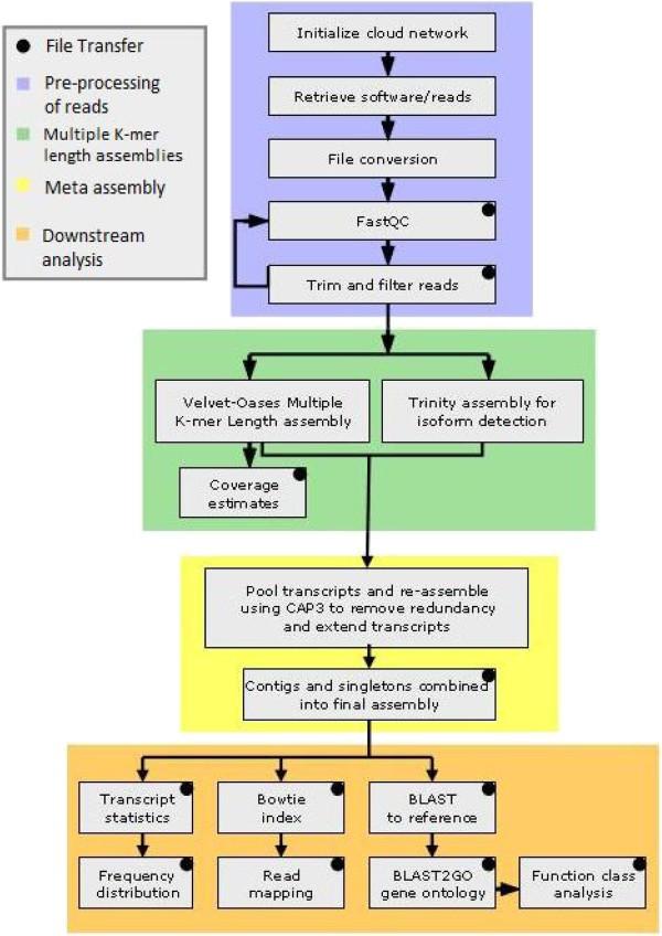 A pipeline for the de novo assembly of the Themira biloba (Sepsidae