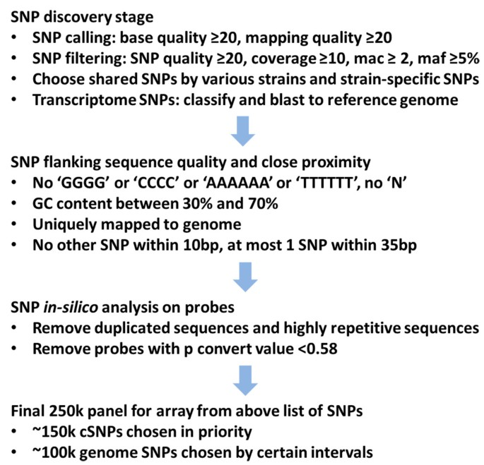 Development and evaluation of the first high-throughput SNP array