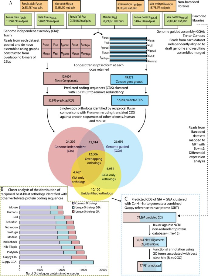 Transcriptome assemblies for studying sex-biased gene