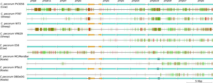 Comparative genomics of koala, cattle and sheep strains of