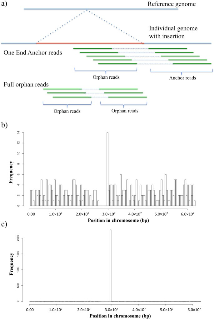 Discovery of common sequences absent in the human reference