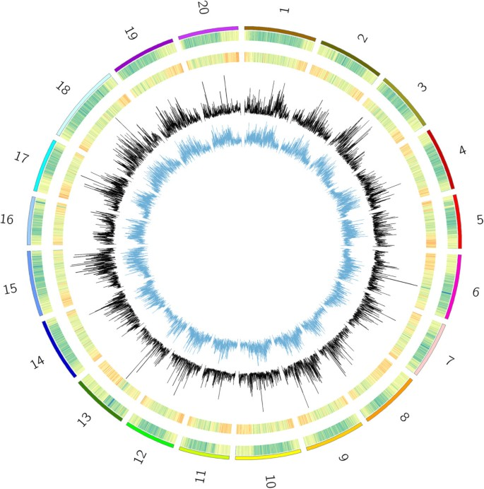 Genotyping by sequencing for genomic prediction in a soybean