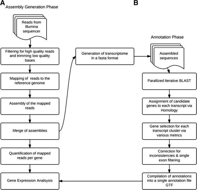 Transcriptome reconstruction and annotation of cynomolgus and