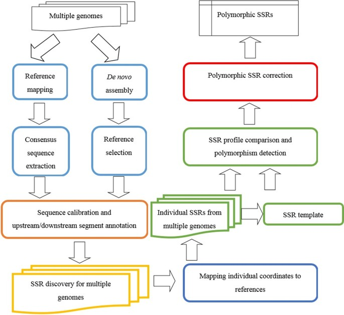 Identification of conserved and polymorphic STRs for personal
